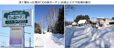 0217北の森.jpg