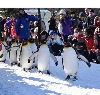 0217旭山のペンギン.jpg