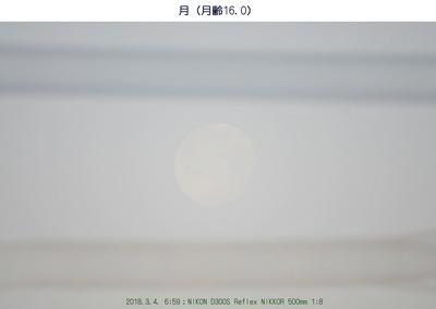 0304朝の月.jpg