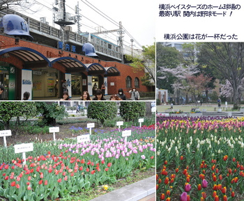 0331花と港と船a.jpg