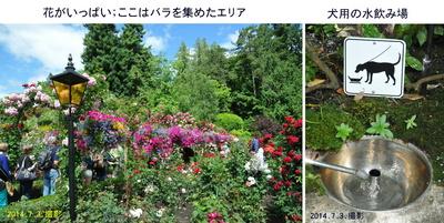 0703花と犬の水.jpg