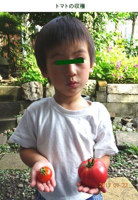 0722トマトと孫.jpg