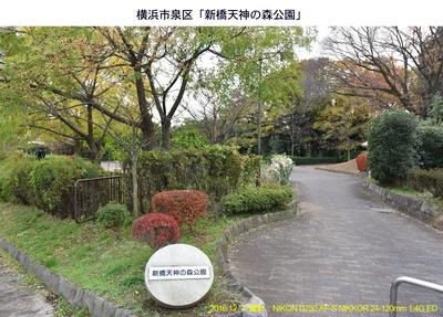 20161203天神の森公園.jpg