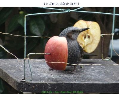 0226ヒヨドリ.jpg